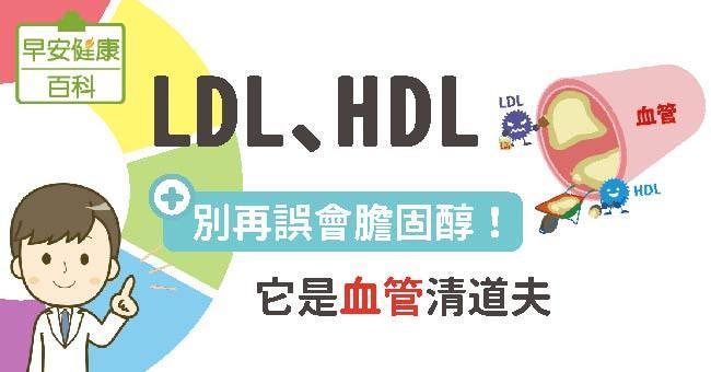 LDL、HDL:別再誤會膽固醇!它是血管清道夫