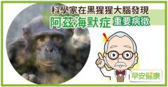 科學家在黑猩猩大腦發現阿茲海默症重要病徵