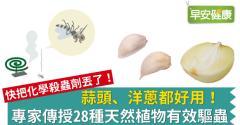 蒜頭、洋蔥都好用!專家傳授28種天然植物有效驅蟲
