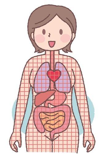 筋膜,內臟