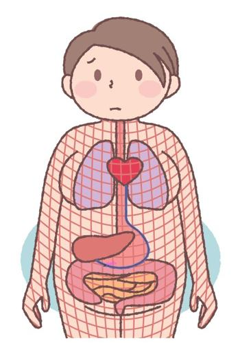 內臟下垂,筋膜