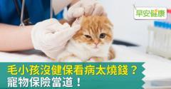 毛小孩沒健保看病太燒錢?寵物保險當道!