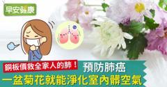 預防肺癌,一盆菊花就能淨化室內髒空氣!