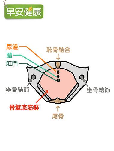 骨盆底肌群