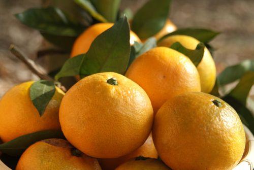 橘子具有預防糖尿病、肝功能異常的效果!