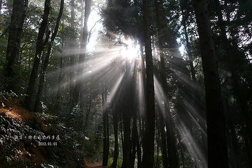檜山巨木森林步道