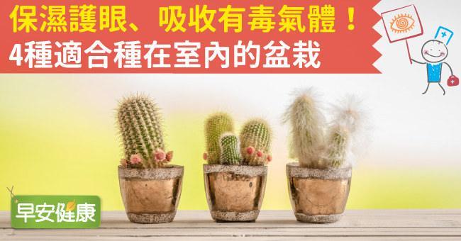 保濕護眼、吸收有毒氣體!4種適合種在室內的盆栽