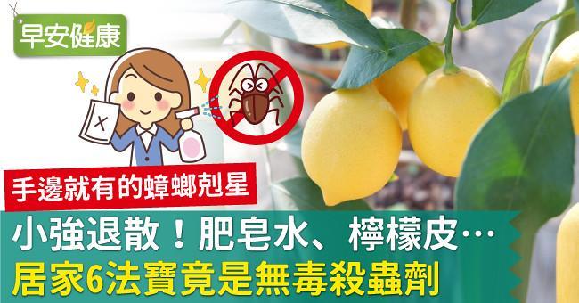 小強退散!肥皂水、檸檬皮…居家6法寶竟是無毒殺蟲劑