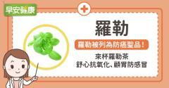 羅勒被列為防癌聖品!來杯羅勒茶舒心抗氧化、顧胃防感冒