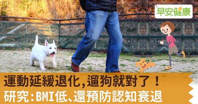 運動延緩退化,遛狗就對了!研究:BMI低、還預防認知衰退