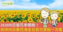 2020向日葵花季開跑!徜徉向日葵花海全台賞花景點一次看
