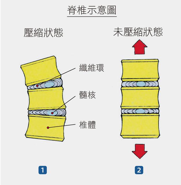 脊椎示意圖2