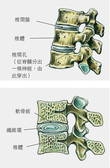 脊椎示意圖