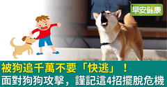 被狗追千萬不要「快逃」!面對狗狗攻擊,謹記這4招擺脫危機