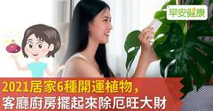 2021居家6種開運植物,客廳廚房擺起來除厄旺大財