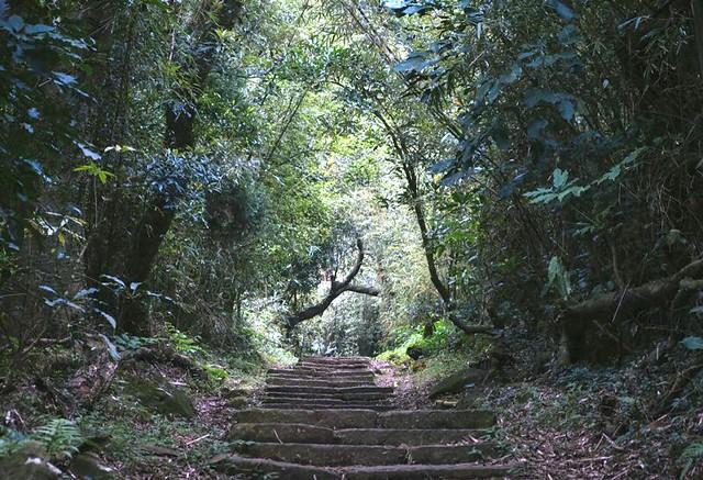 忠義山步道林蔭茂盛