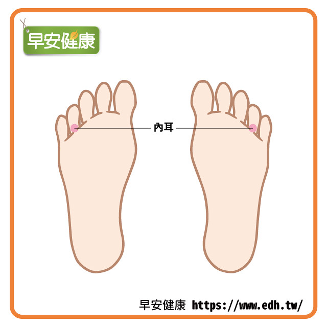 腳底按摩:內耳反射區